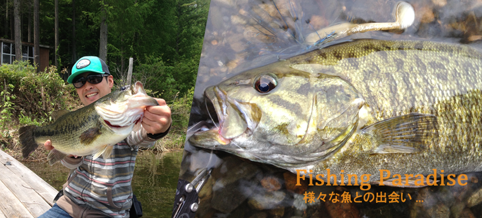 長野県木崎湖,釣り,ワカサギ
