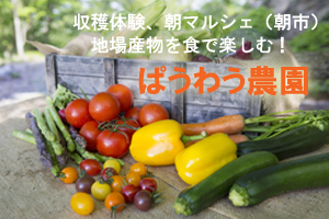 野菜の収穫体験 農業体験 大町市